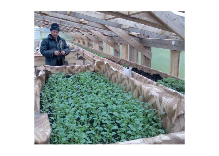 Бизнес на рассаде овощей и цветов 783